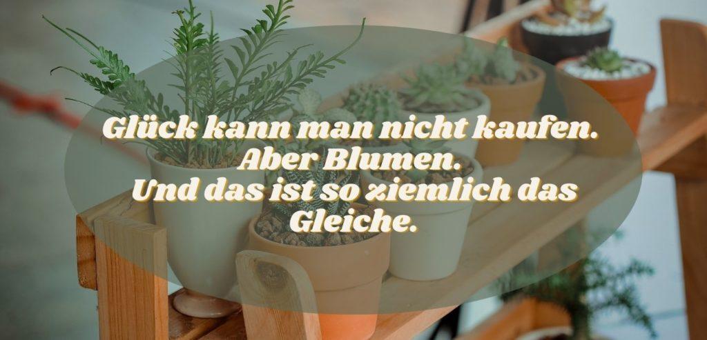 Glück kann man nicht kaufen. Aber Blumen. Und das ist so ziemlich das Gleiche. Bildquelle: healthyfeelings.de, erstellt mit canva.com